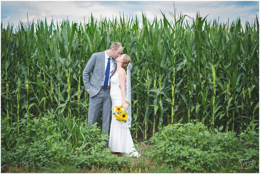 kissing in the cornfield